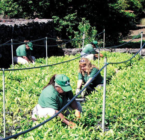 Mujeres inmigrantes cooperativistas y ecologistas for Jardineria ecologica